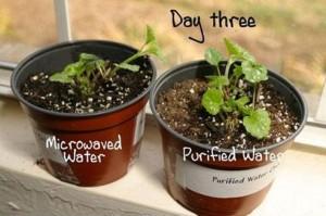 test plante micro-onde jour 3